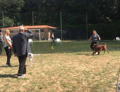 EXPO' ACSI Cinofilia – Toscana
