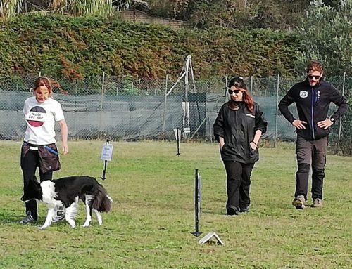 Gara Rally 4 Us – Target Dog ASD