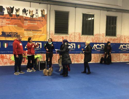 Dog Dance ACSI – DDI